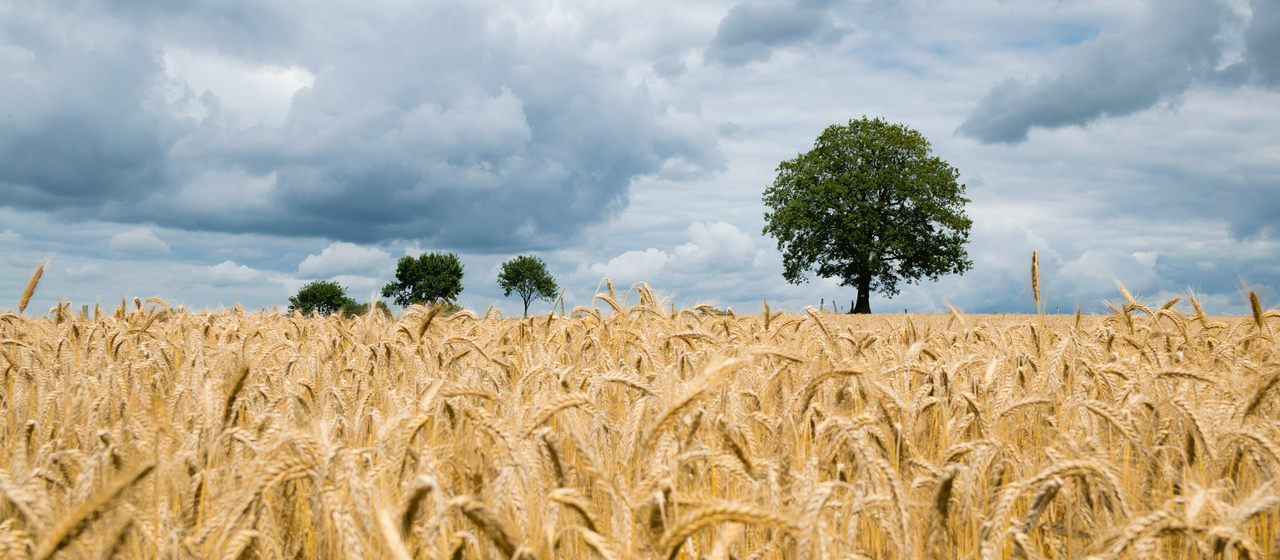 Antenes Andreu - Agricultura y Ganadería