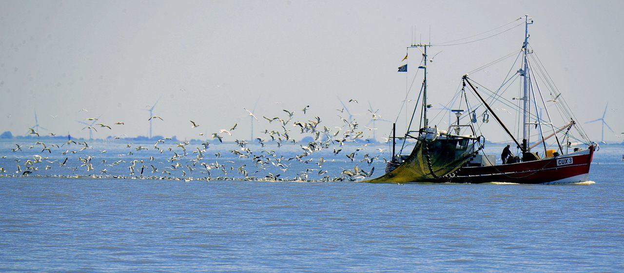 Antenes Andreu - Pesca y alimentación